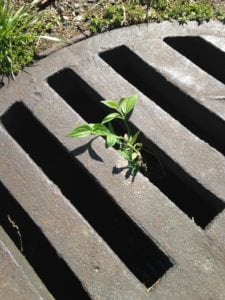 plant escaping