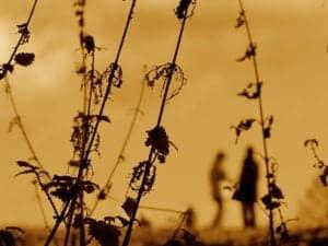 autumn nettles