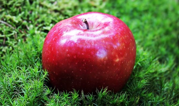 A red apple resting on green moss.
