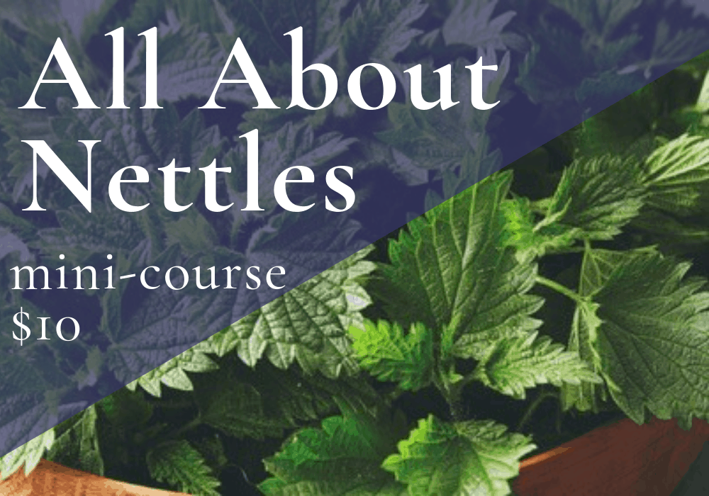 All About Nettles mini-course banner