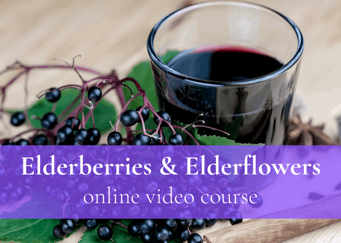 Check out our online video course about Elderberries & Elderflowers - learn all about how to make elder herbal remedies.